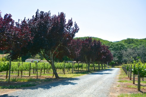 Napa Valley | The Naptime Chef