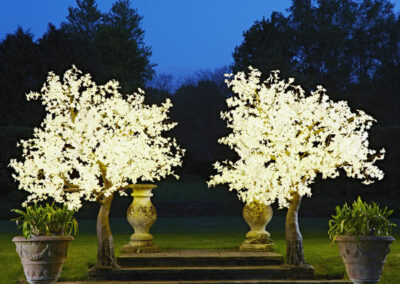 hire-led-maple-tree-white-leaves-twilight-trees_orig