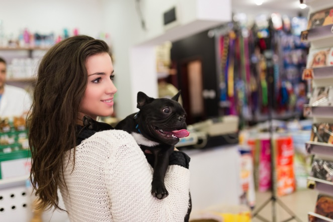 Owner and frenchie choosing a collar and leash inside a store
