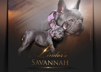 Savannah (1)