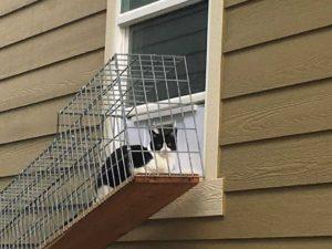 cat_0041