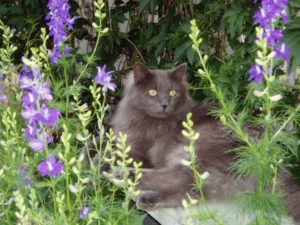 cat_0058
