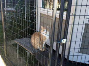 cat_9861