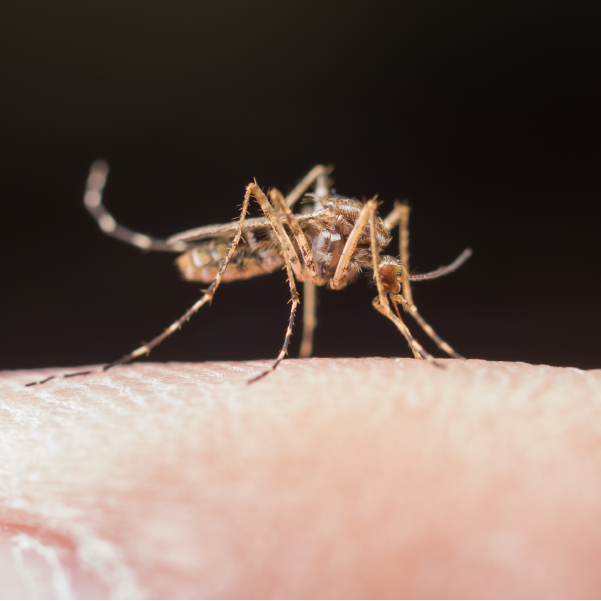 Dengue, la epidemia de la que nadie habla