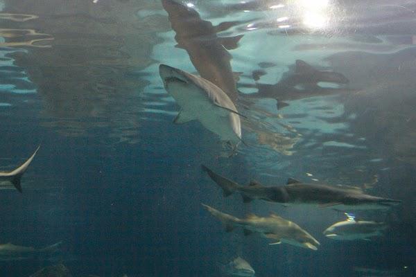 Adventure Aquarium - Burlington, NJ