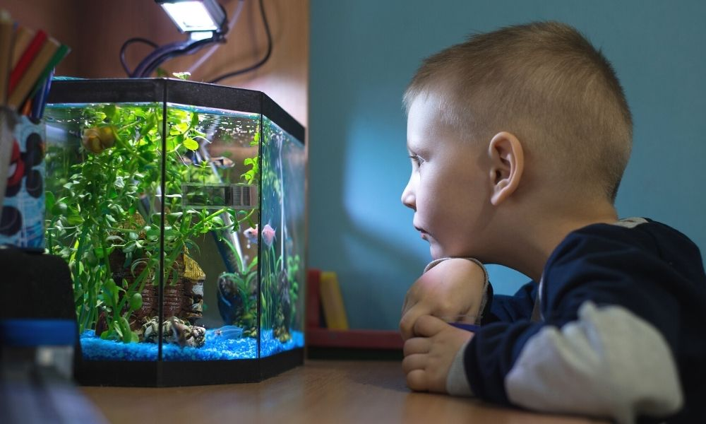 The Best Pets for Kids With Autism