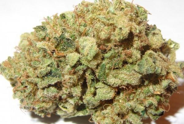 The Latest on Marijuana