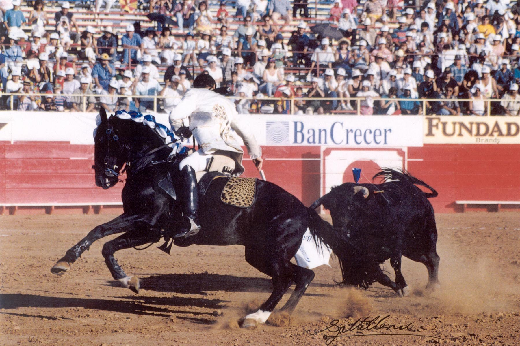 Hawk bullfighting 2 orig