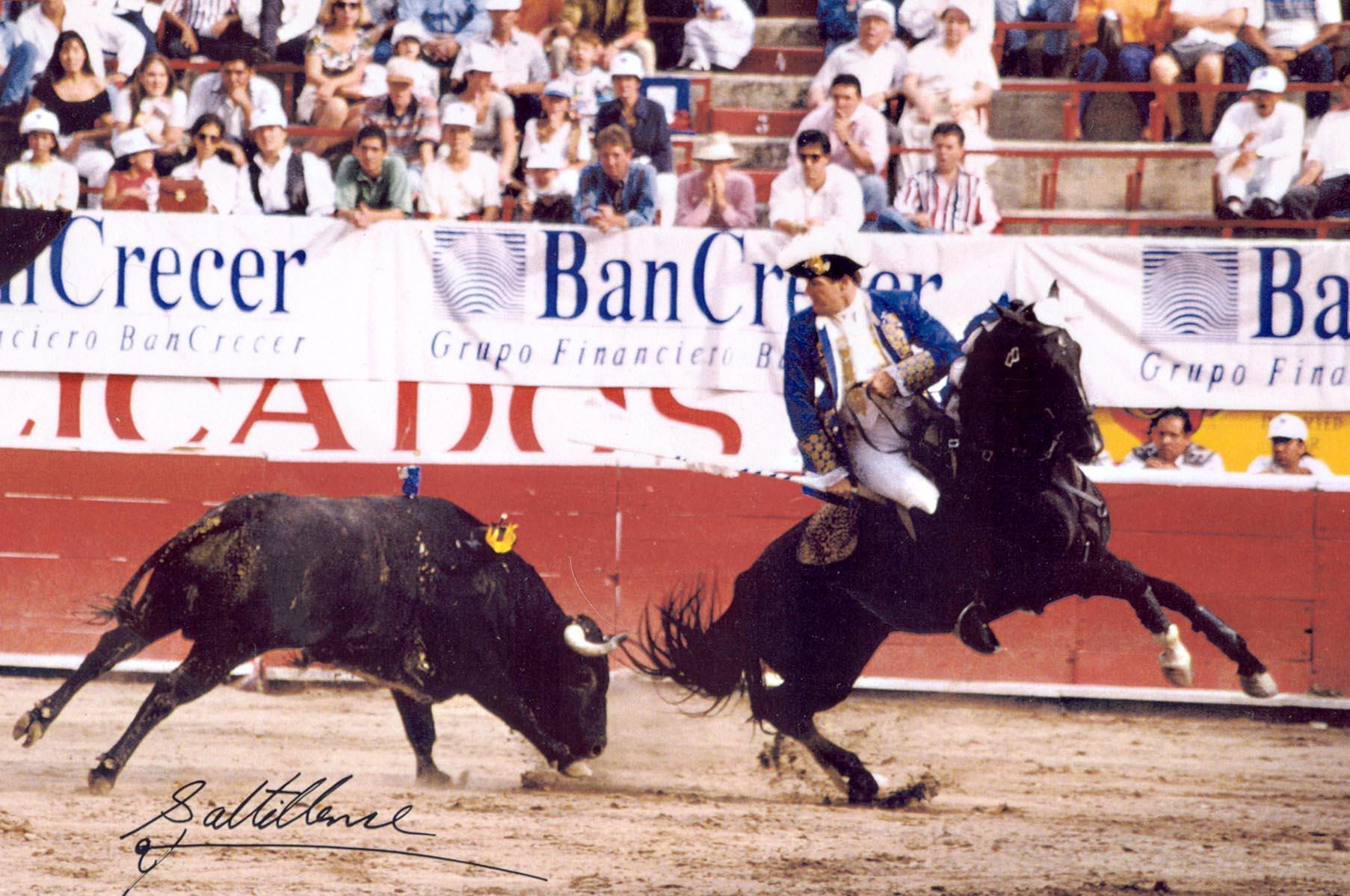 Hawk bullfighting for frame