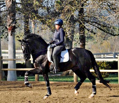 Tomar (aka Thor) with Linda Walton at Brookside Equestrian