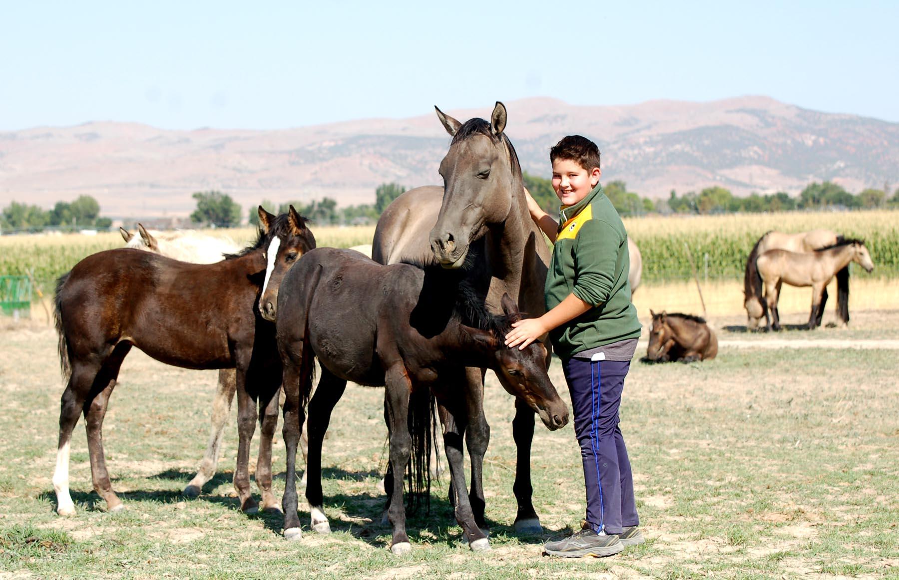 Jaz Ranch Ameritano horses