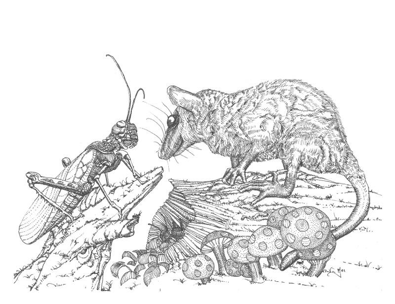 Possum & Grasshopper