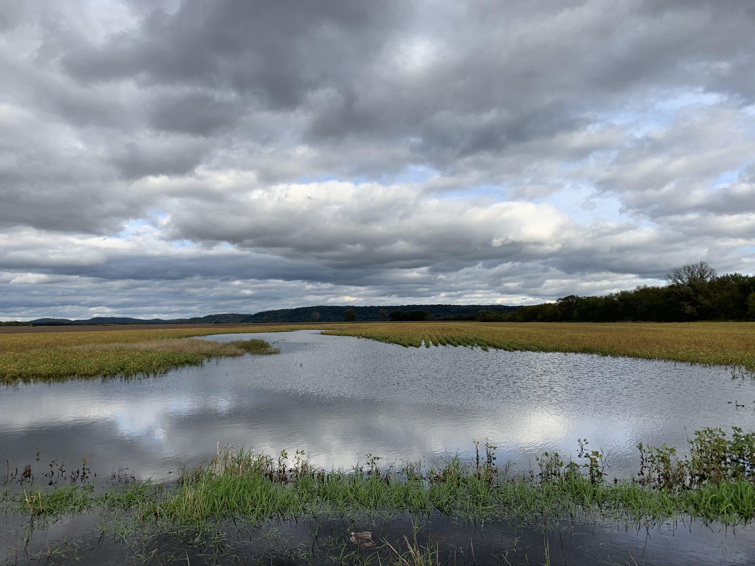 Molly Jahn, Flooded soybean fields