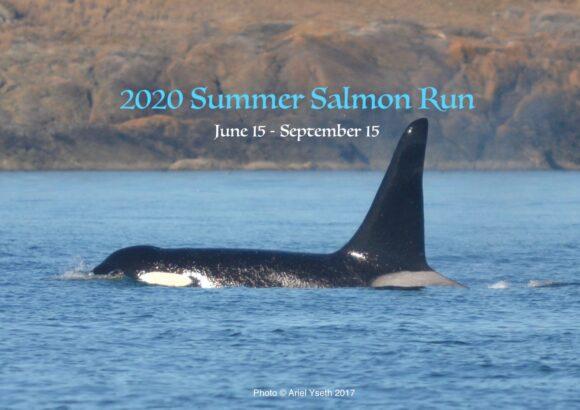 Join the 1st annual Summer Salmon Run!