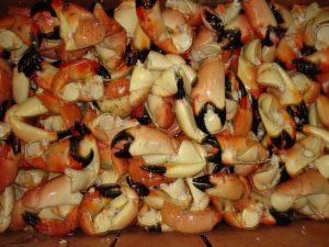 StoneCrab Claws Stone Crab