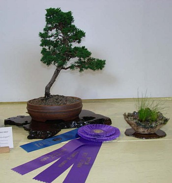 Best of Show and First Place, Needled Evergreen Class - 2007 Iowa State Fair, Shimpaku; Ivan Hanthorn