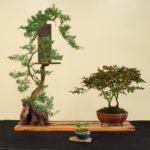 Earth Day Spring Bonsai Exhibit 2017