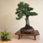 Earth Day Spring Bonsai Exhibit 2018