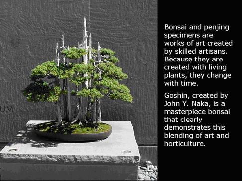 penjing_bonsai_image