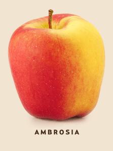 ambrosia bcfruittree compressor