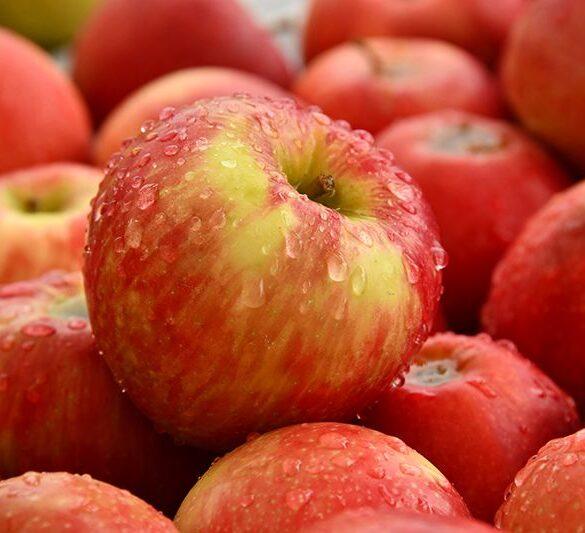 apples 1 compressor