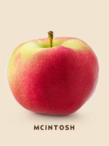 mcintosh bcfruittree