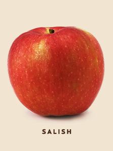 salish bcfruittree