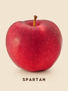 spartan bcfruittree