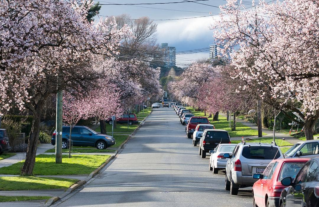 Victoria to Vancover Victoria in Spring