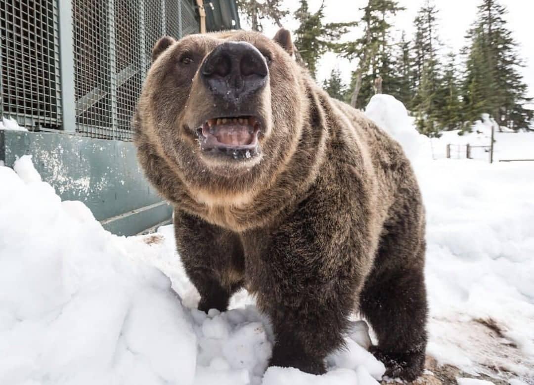 Grouse Mountain Guide wildlife