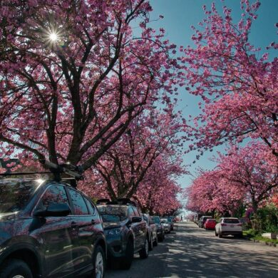 Places to visit around vancouver during spring 2