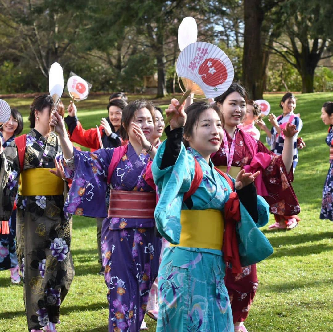 Places to visit around vancouver during spring cherry blossom fest 3
