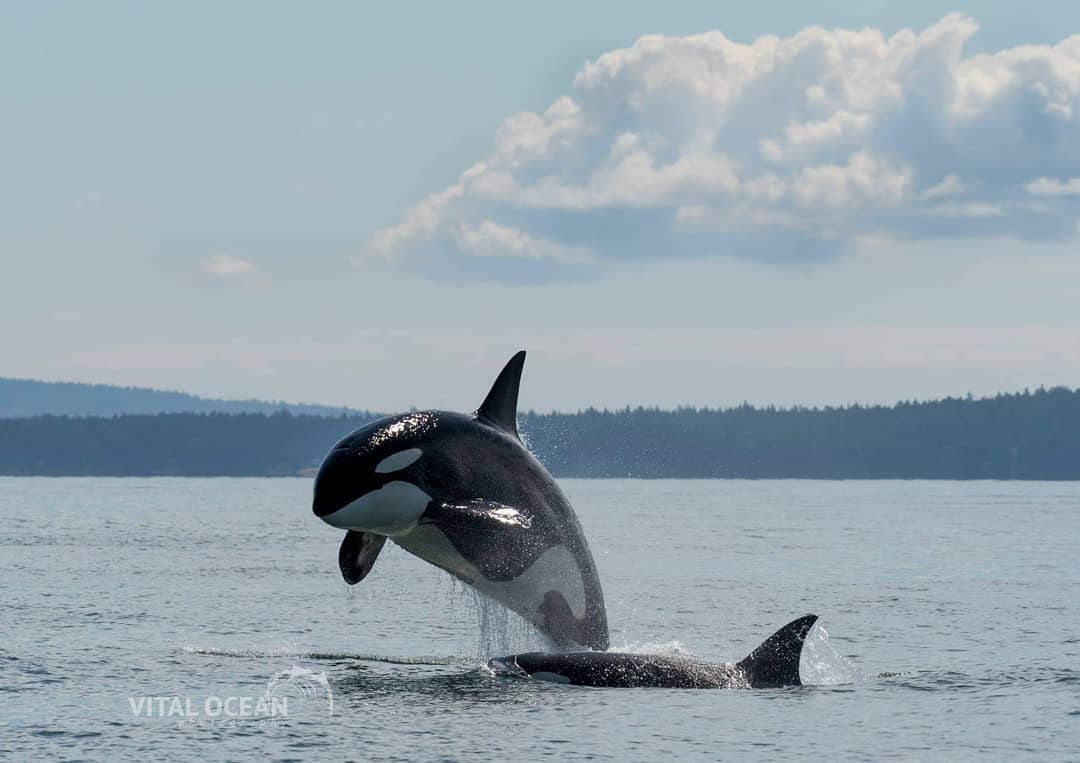 Places to visit around vancouver during spring whale watching