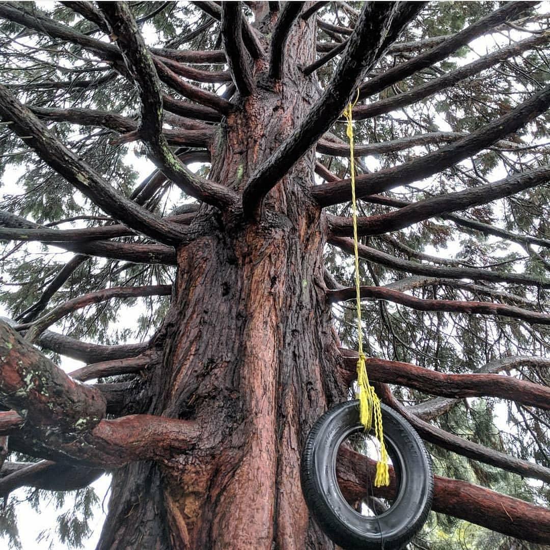 Vancouver hidden gems cambie climbing tree
