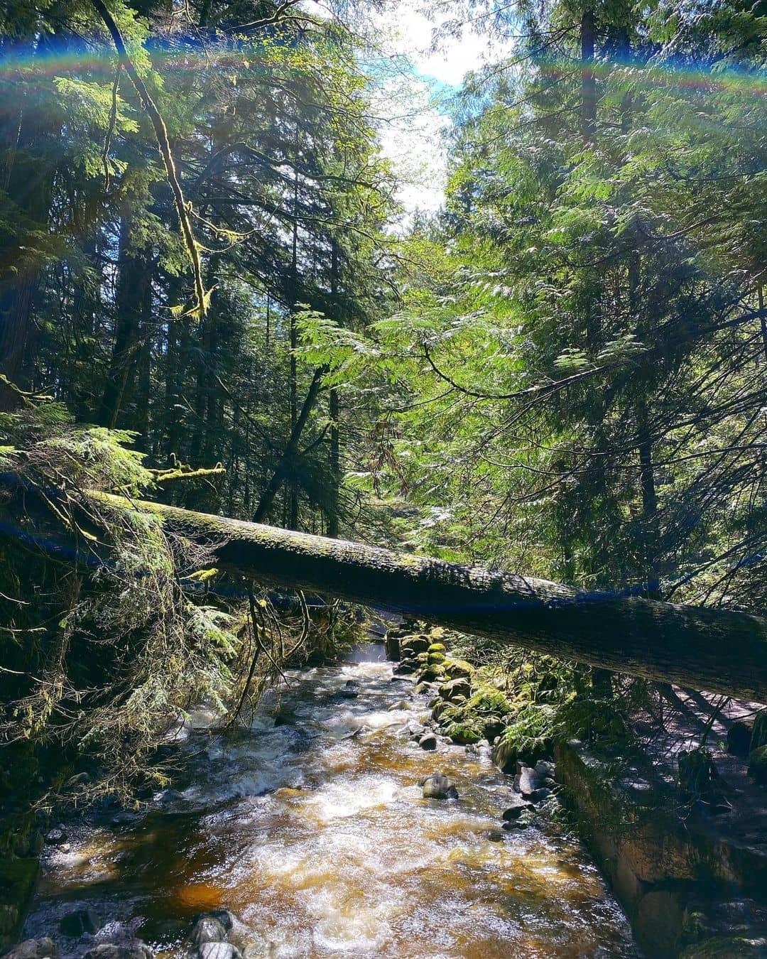 Vancouver hidden gems cypress falls park