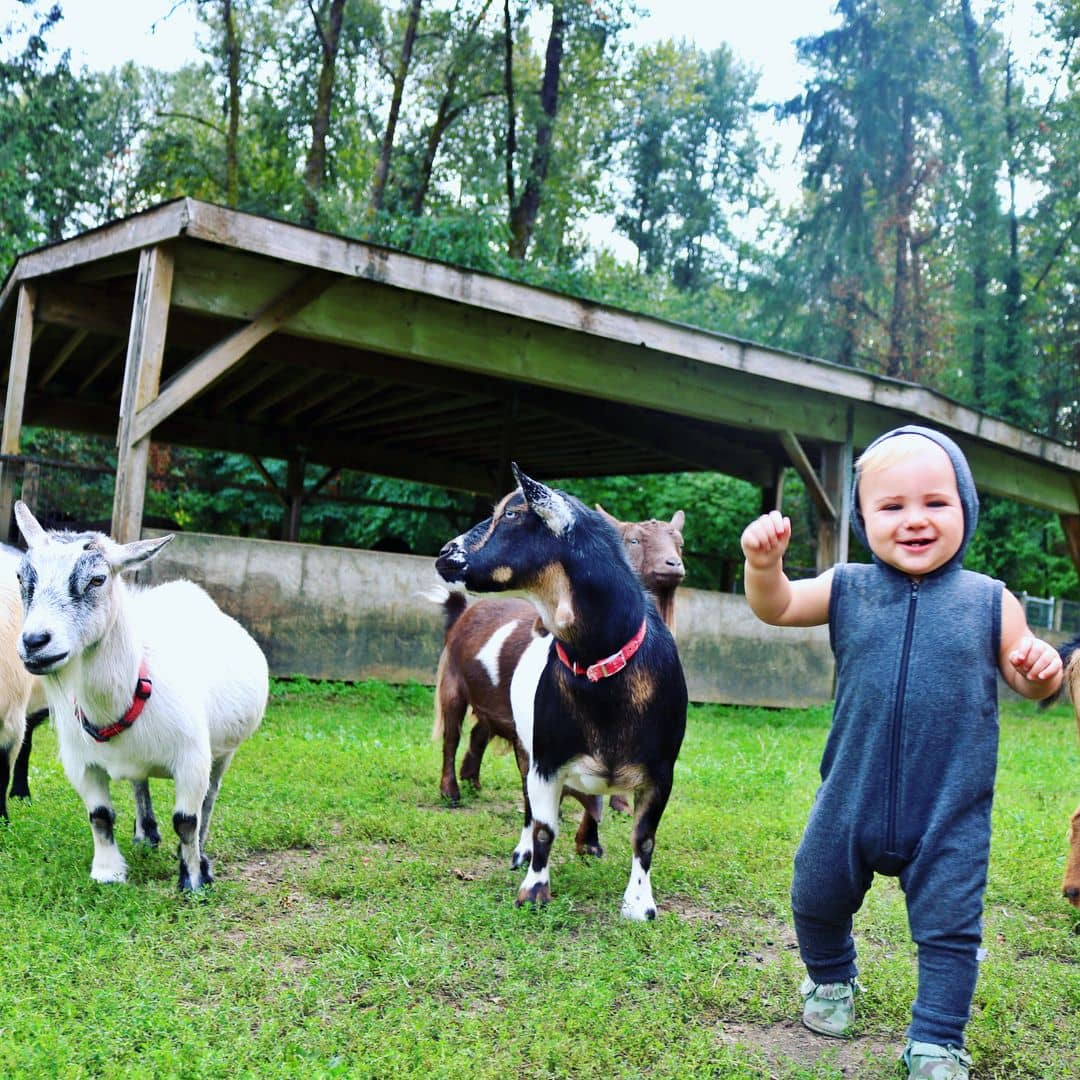 Vancouver kid friendly activities - maplewood farm of child with goats