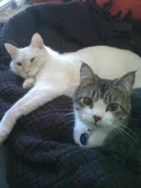 Newton and Wilba, Feline  Representatives
