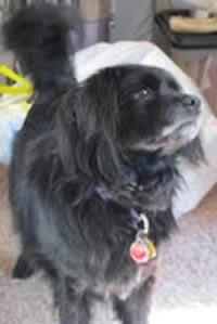Stella, Chief Canine Representative