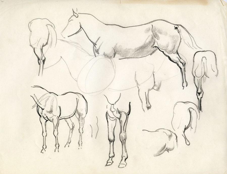 Pencil sketches of horses