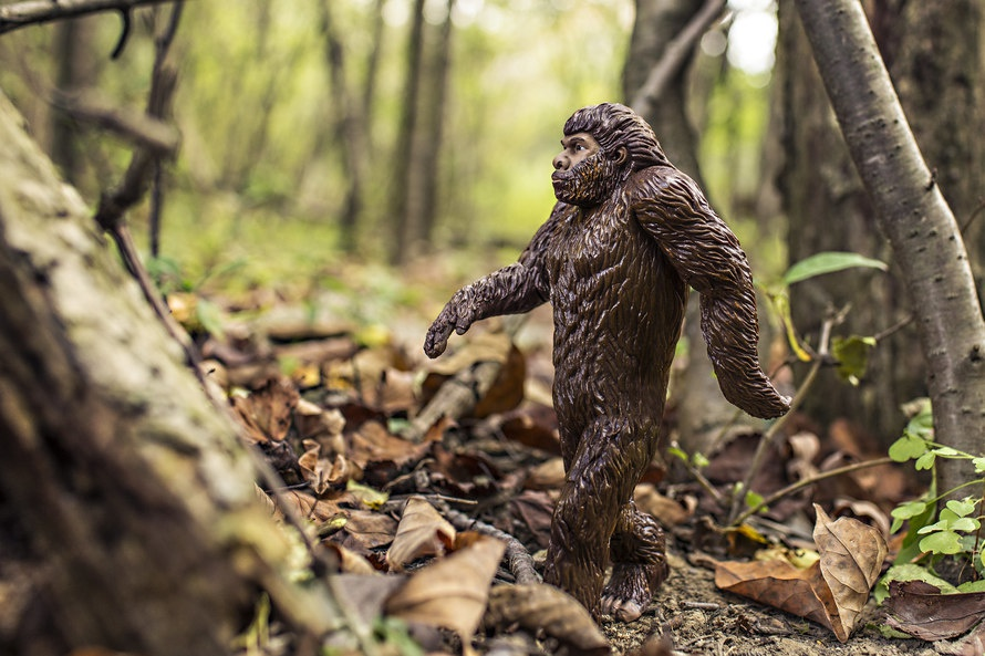An animal toy walking in nature. Photo by: www.gratisography.com