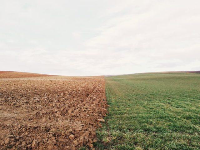 Climate change in grasslands. Pexels.com