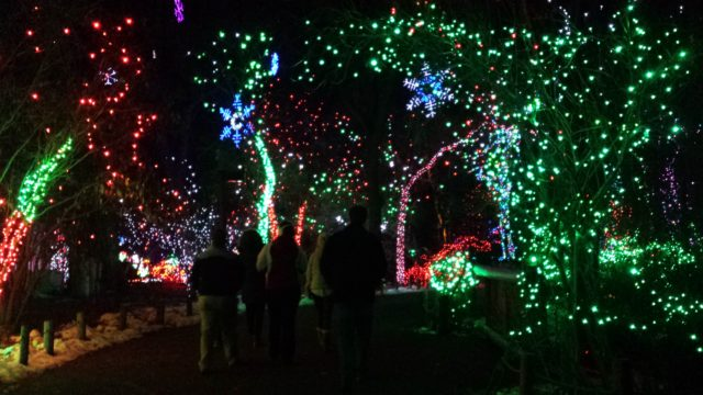 Denver Zoo Lights 2016. Photo by: Matthew McGuire