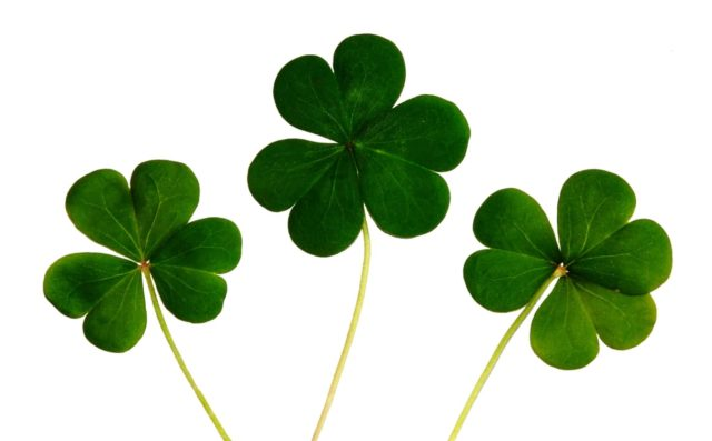 Three leaf clovers. St. Patrick's Day 2017. Photo by: Pexels.com