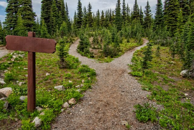 A trail with a fork representing a decision. Photo by: Pexels.com / James Wheeler