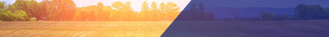 Sugar beet field at sunset