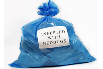 Bed Bugs Dry Cleaning