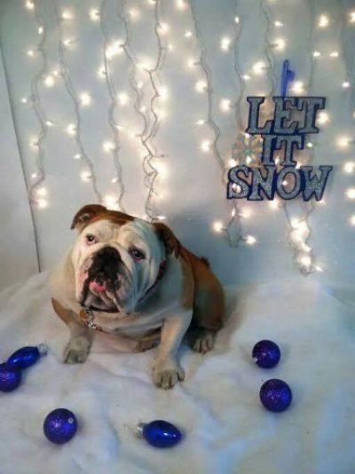 Cobbs Ford Pet Health Prattville AL Happy Dog