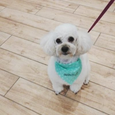 Groomed Pet at Cobbs Ford Prattville Health Care