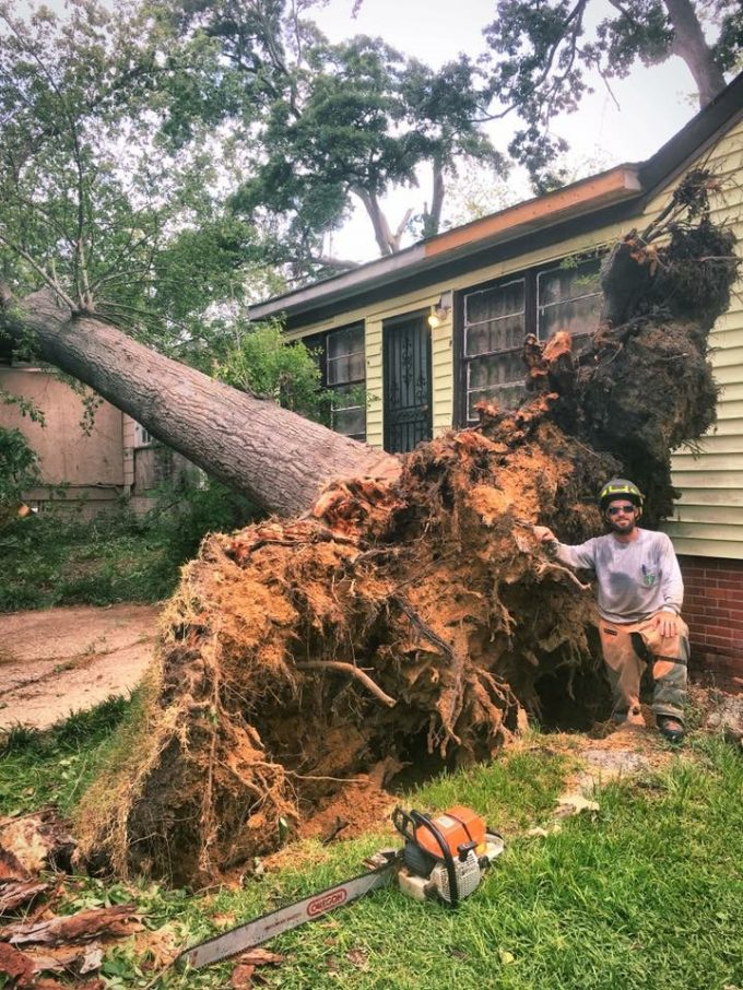 Tree Crown Thinning and Reduction Prattville, Millbrook, Wetumpka and Montgomery, AL