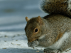 Squirrel Removal services in Prattville, AL